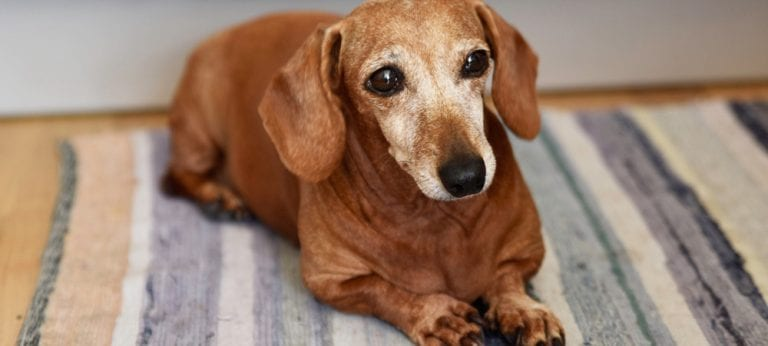 Senior Dog Care: Canine lumps and bumps