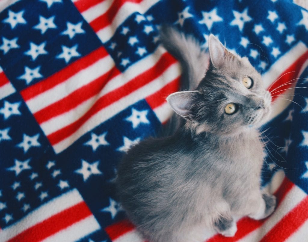 Gray kitten sitting on flag blanket