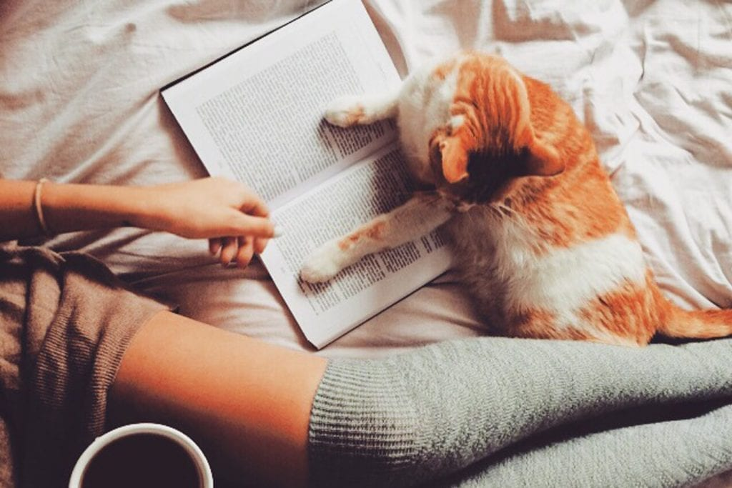 An orange and white cat lays next to a human who was reading a book in bed