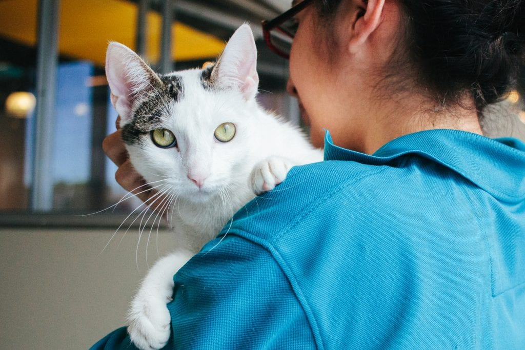 A woman in a blue collared shirt holds a brown and white cat on her shoulder