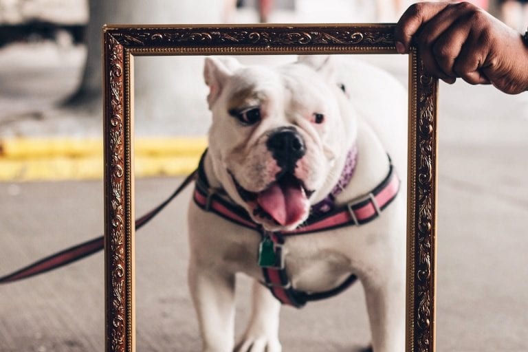 A hand holds a picture frame in front of a white dog on a leash