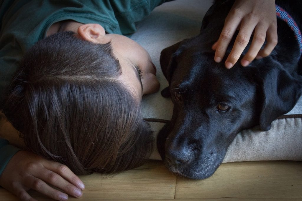 A person is laying next to a Black Lab while petting it