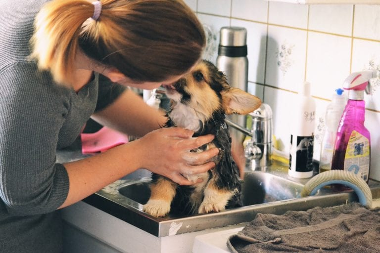 Dog Baths: How to Bathe a Dog
