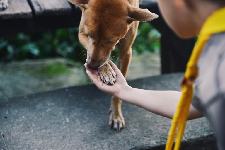 Brown dog with its paw in a person's hand (768x512)