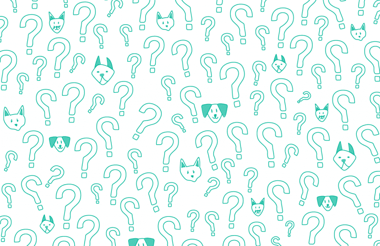 Teal dog, cat & question mark drawings (768x498)
