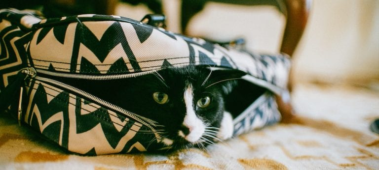 A black and white cat peeks out from within a purse