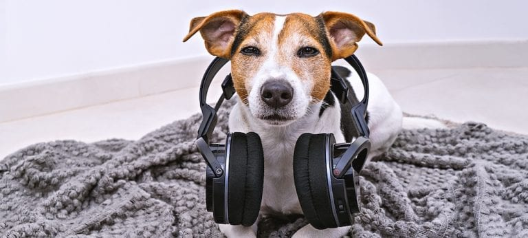 Dog Music and Cat Music