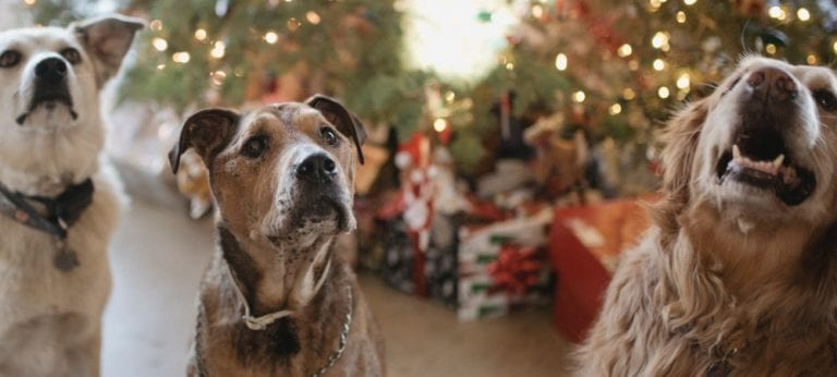 2019 pet gift guide